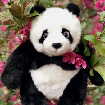 Plush Panda Xian Xian - Coming Soon