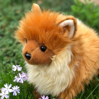 Brown Pomeranian ©