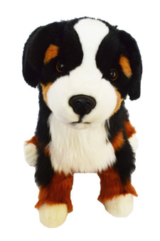 Coming in Soon Beau © Our 20 Inch Bernese Mountain Dog