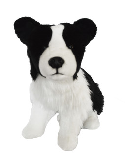 Hunter © Our 20 Inch Border Collie- Just Arrived
