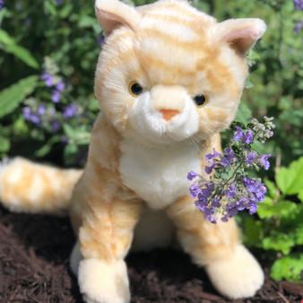 Taffy Striped Orange Kitten-Cat