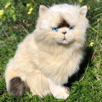 Sheba Chocolate Himalayan Cat
