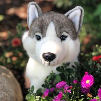 "Shade Sitting Husky Plush Dog 14""-Sold Out"