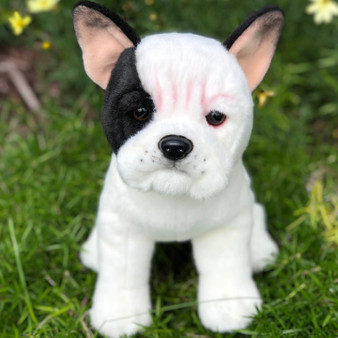 Izzy Our White With Black Markings French Bulldog