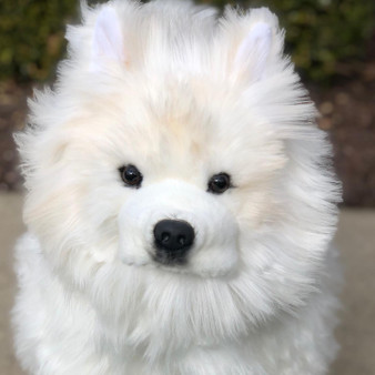 JoJo Our Life Size Samoyed- Limited QTY 120- Preorder
