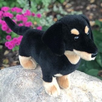 Strudel Our Black and Tan Plush Dachshund Puppy Dog - Coming Soon