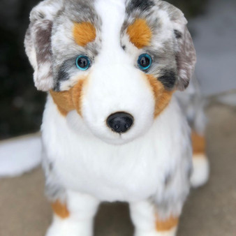Shep Our New Australian Shepherd- Limited QTY 120- Preorder