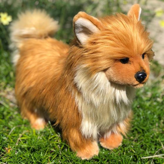 Kibbles Brown Pomeranian ©
