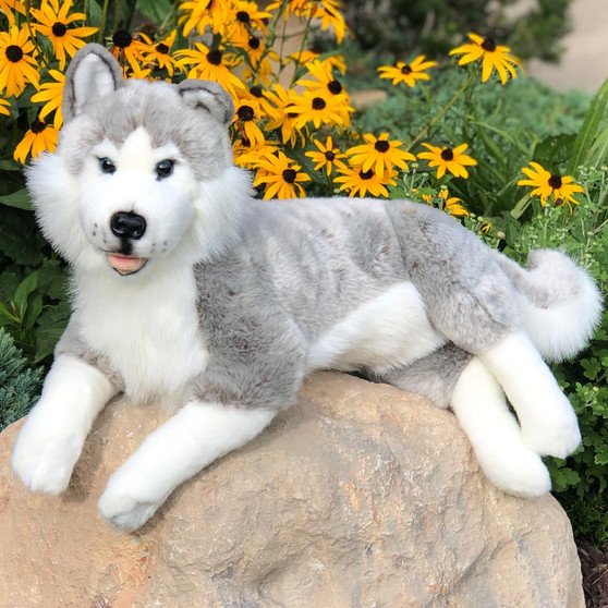 Blizzard 17 Inch Laying Husky Plush - Sold Out Preorder for August