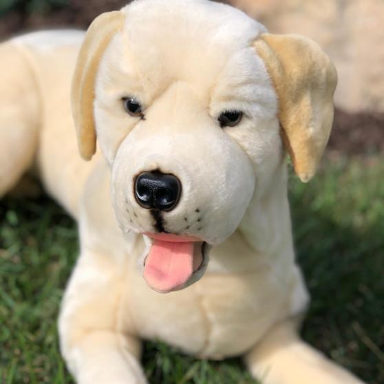 Boomer Our Large Labrador Retriever -25 Inch