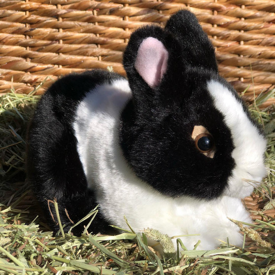 Hollander Our Mini Dutch Bunny