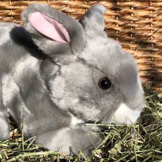 Blueberry Grey Bunny Rabbit