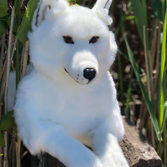 Osceola 20 Inch  Laying Wolf