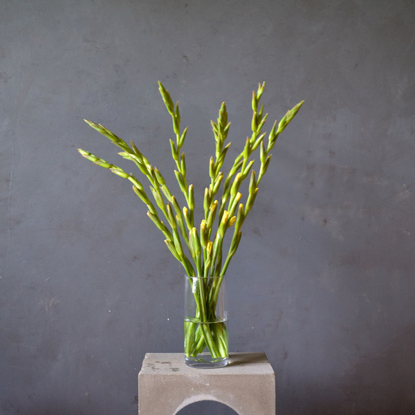 botany-seasonal-surprise-gladioli