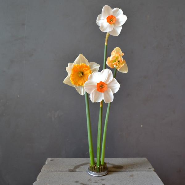 daffodils-in-small-kenzan