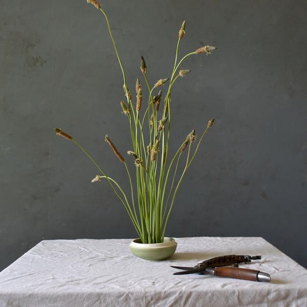 botany-grasses-in-kenzan
