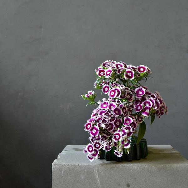 botany-small-kenzan-sweet-william