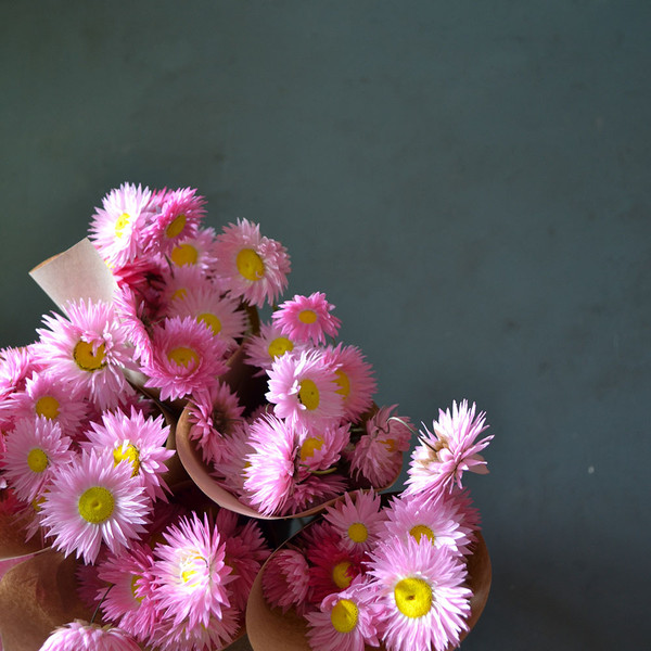 close-up-of-paper-daisies