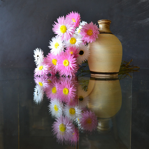 paper-daisies-reflected-on-glass