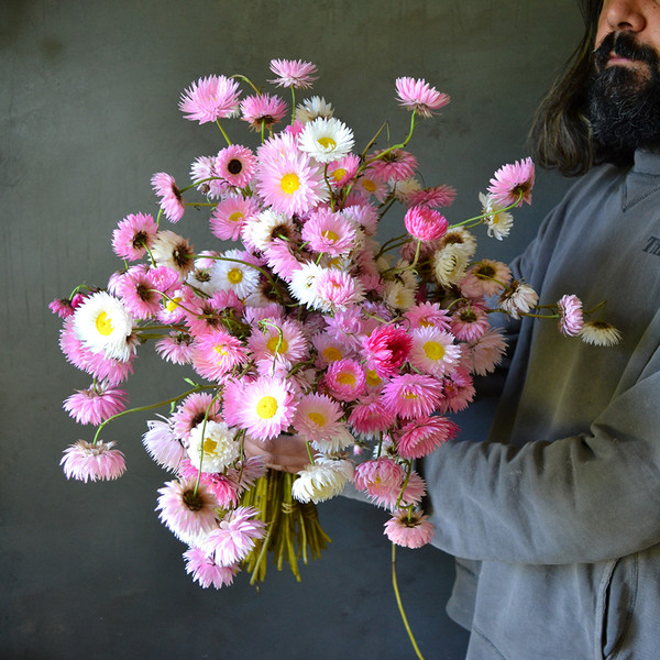 An-armful-of-paper-daisies