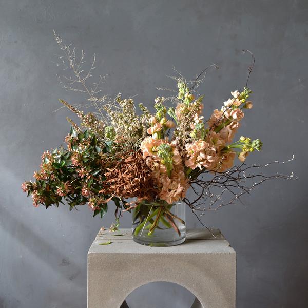 corokia-with-fresh-flowers-botany