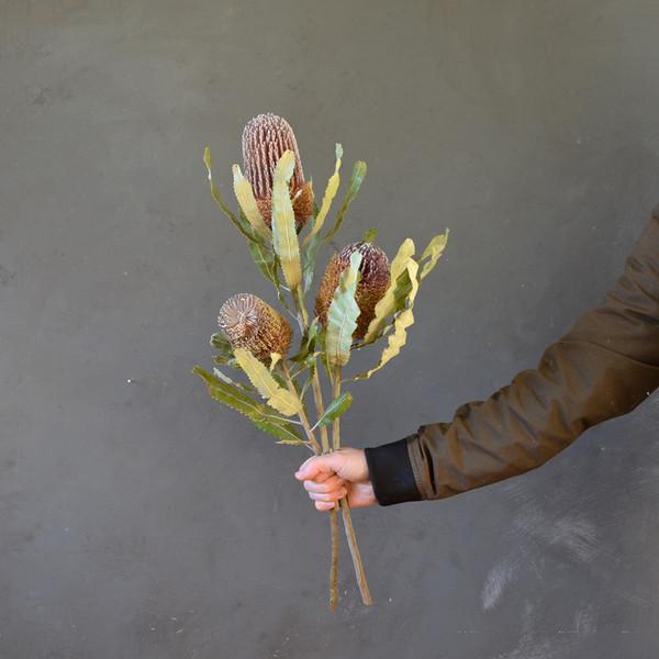 botany-dried-banksia-x3