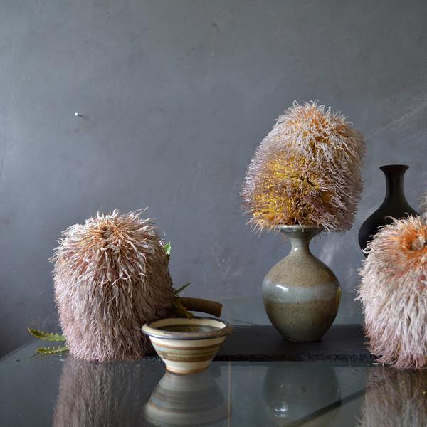 possum-banksias-on-table