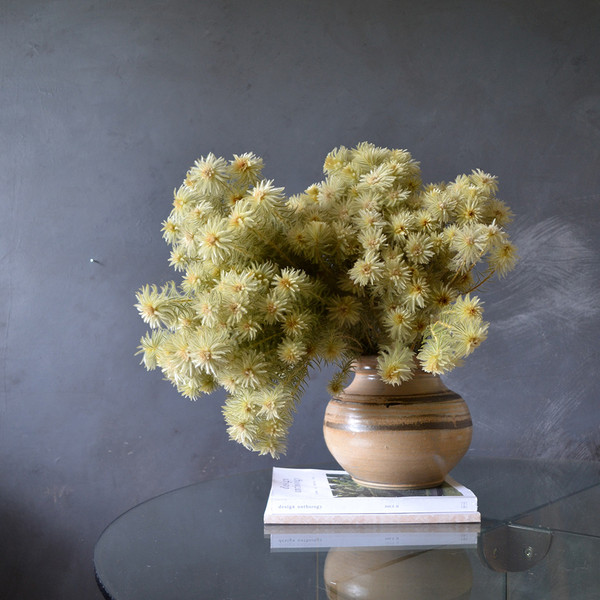 dried-phylica-two-bunches-in-vase