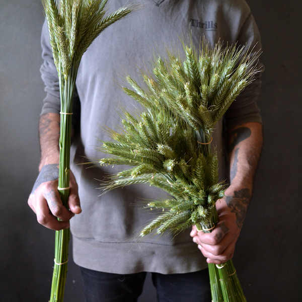 a man holding dried wheat