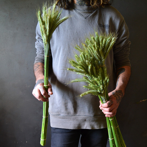 a man holding dried wheat bunches