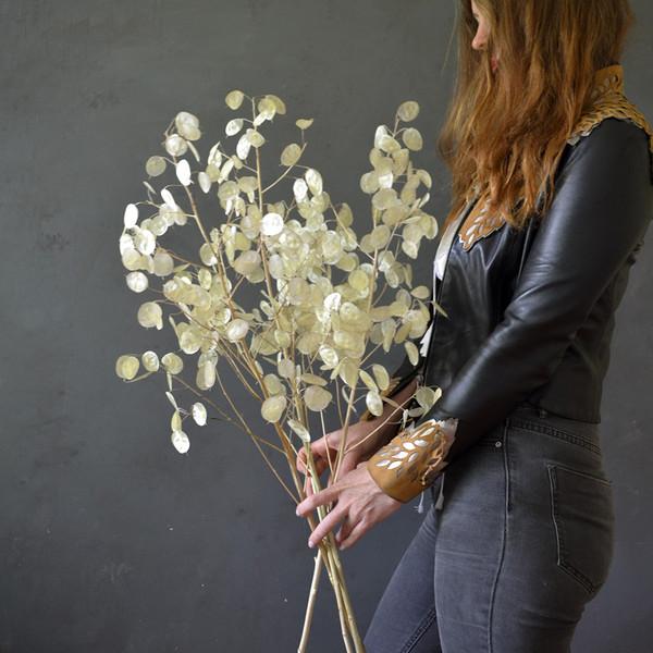 botany-dried-lunaria-stems