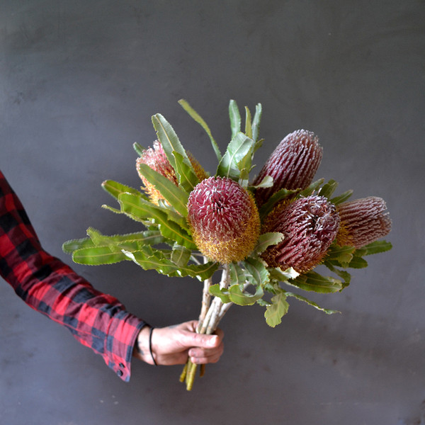 botany-dried-banksia