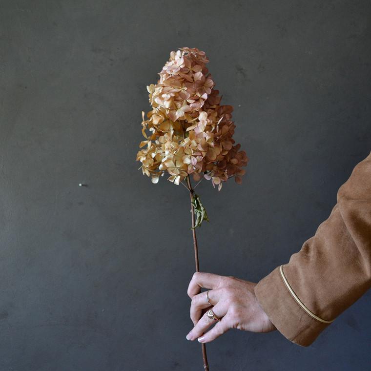 dried-hydrangea-stem