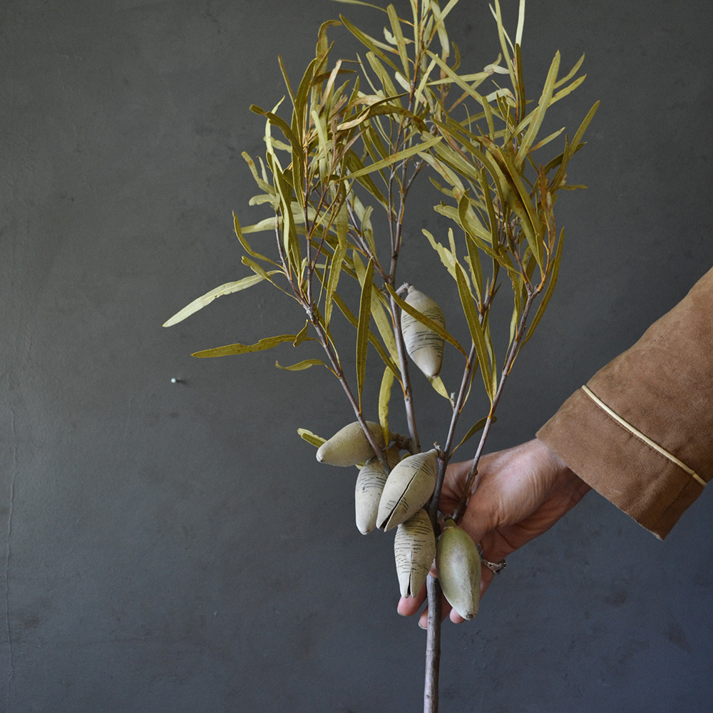 dried-native