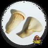10cc Liquid Mushroom Culture Abalone Mushroom, (Maple Oyster Mushroom)