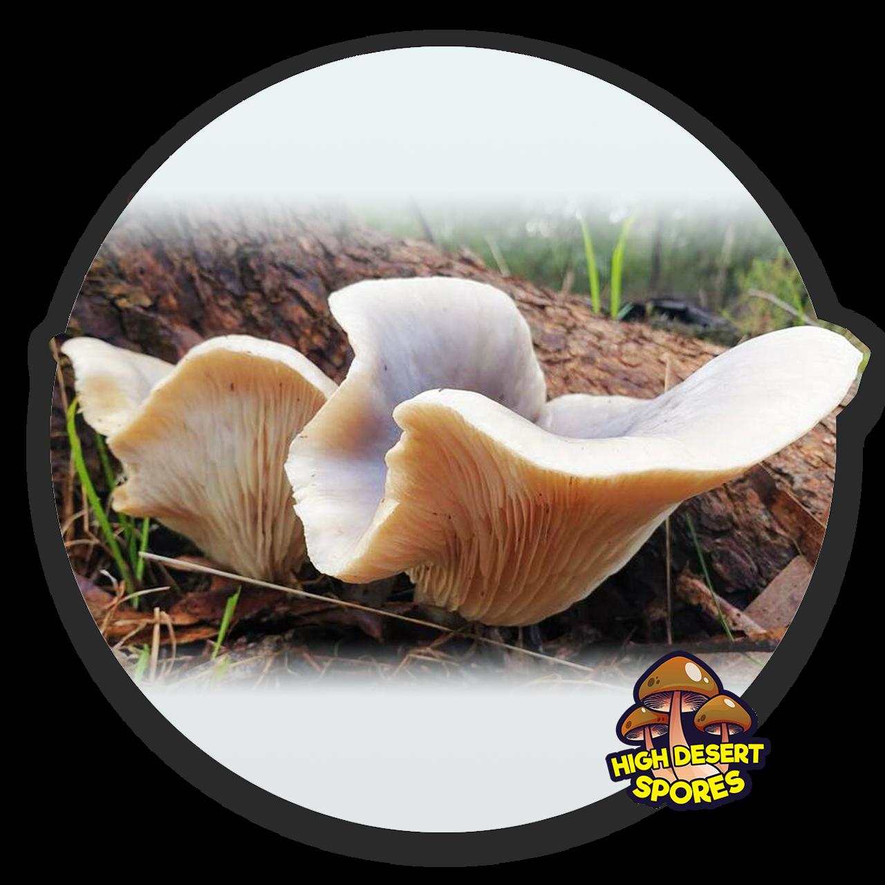 10cc Liquid Mushroom Culture Ghost Fungus (Omphalotus Nidiformis)