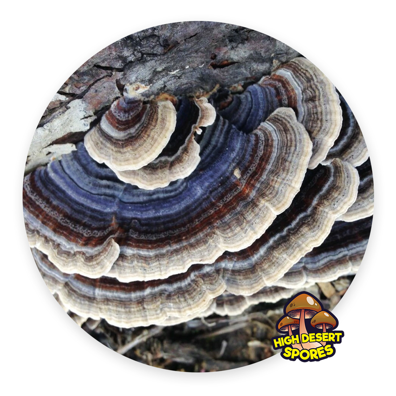 10cc Liquid Mushroom Culture Turkey Tail (Trametes versicolor)