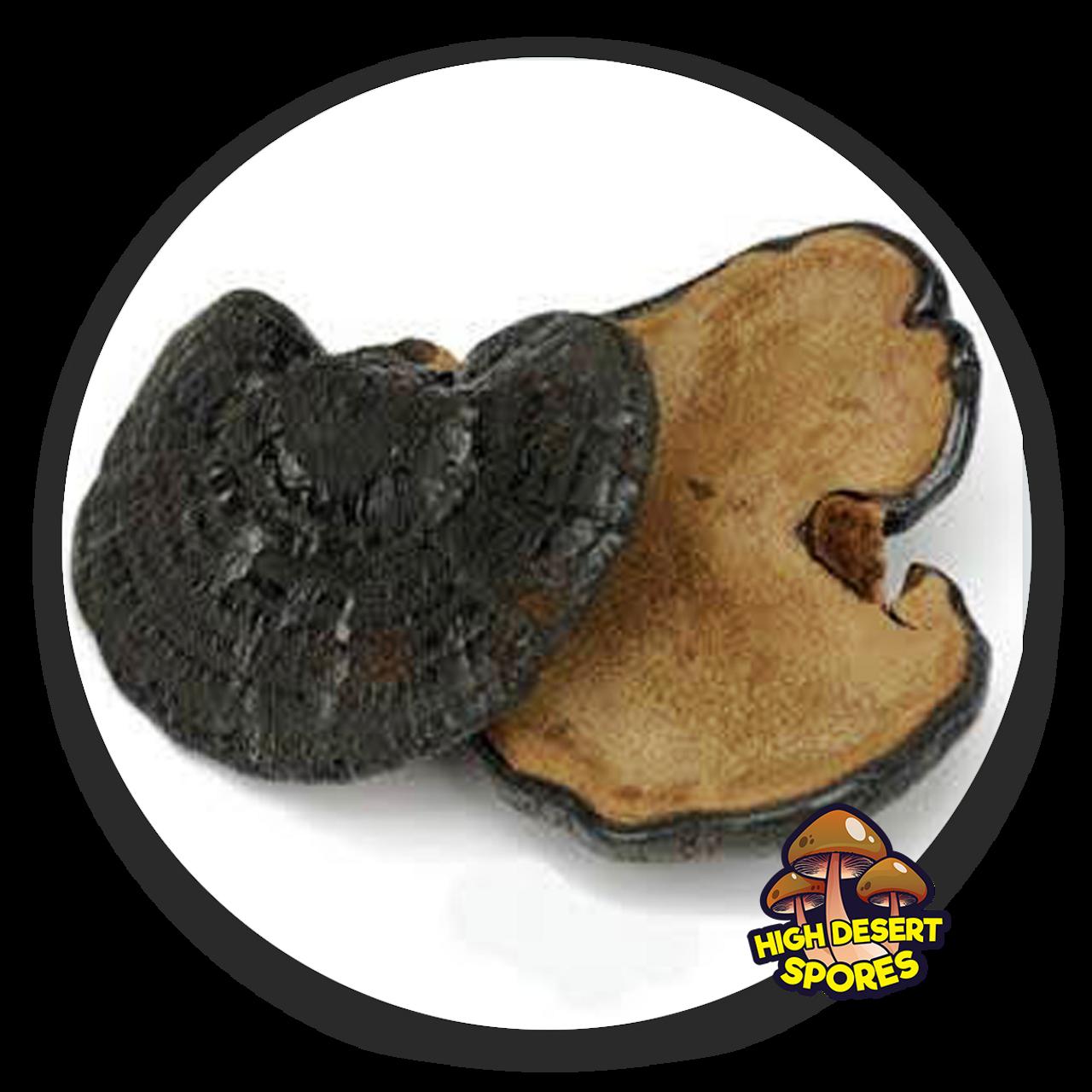 10cc Liquid Mushroom Culture Black Reishi (Ganoderma sinense)