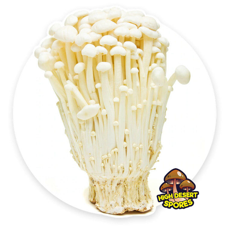 10cc Liquid Mushroom Culture Enoki (White) (Flammulina velutipes)