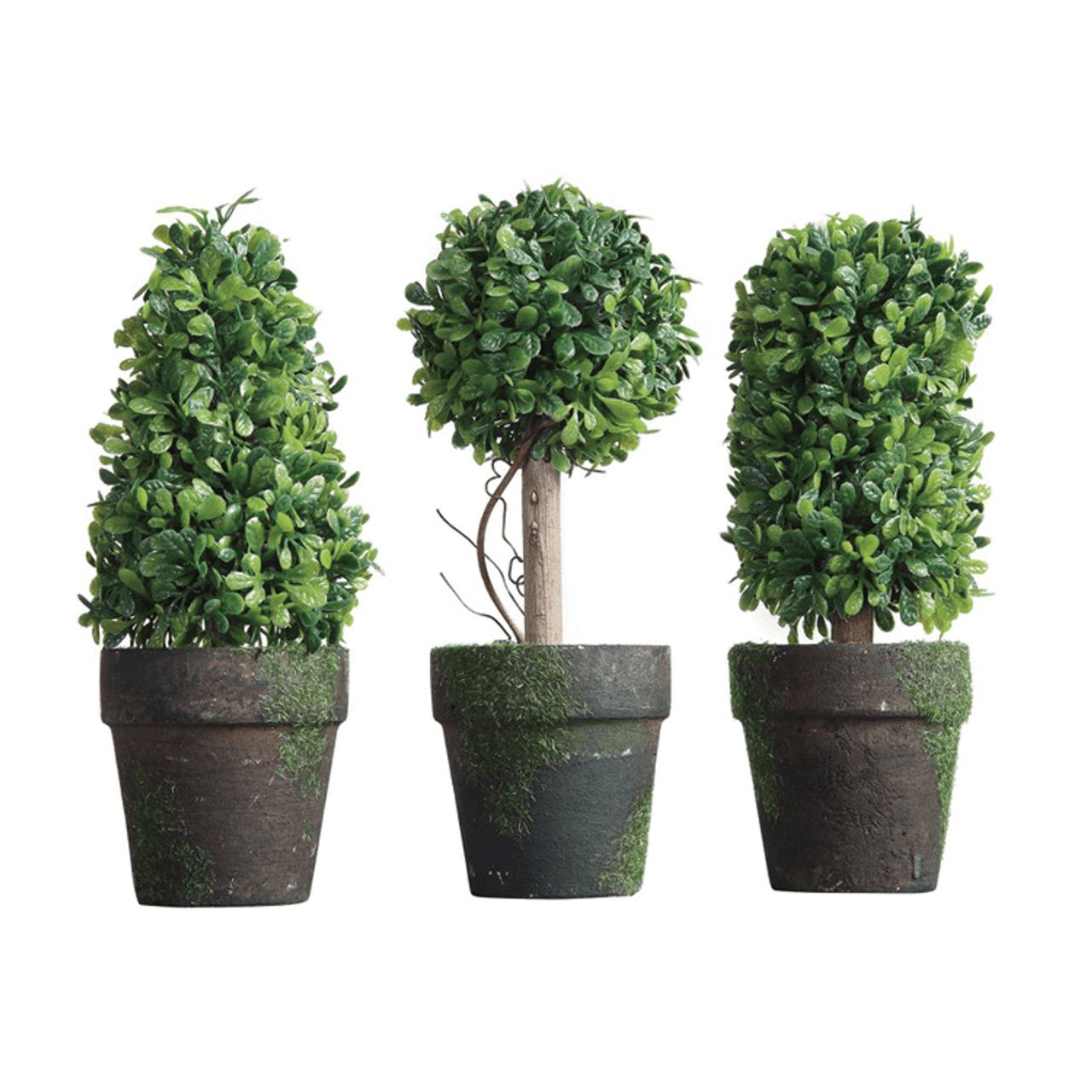 Creative Co Op De3129a Csid Secret Garden Mini Topiary Green Tucker S Valley Furniture