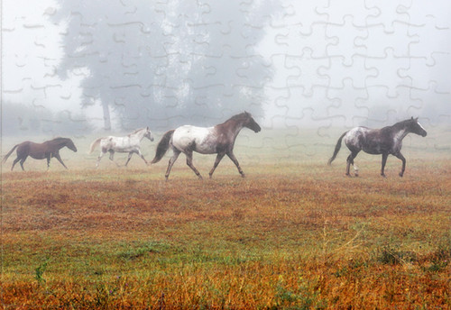 Horses romp in the fog jigsaw puzzle