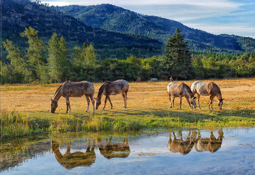 Ranch waterhole jigsaw puzzle