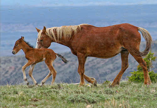 110 Piece Jigsaw Puzzle - Wild Horses - Mare and Foal