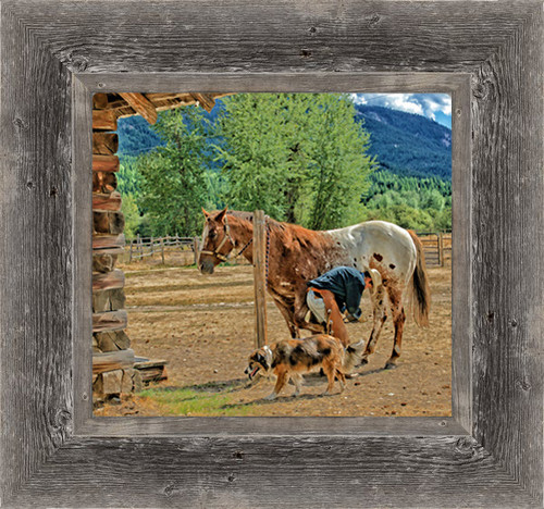 Ranch owner trims a horse's hooves while the ranch dog hangs out close-by to pick up the hoof treats