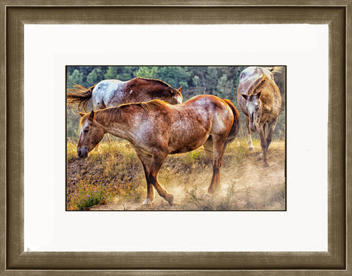 Horses kick up dust on a trail as they head to a ranch waterhole