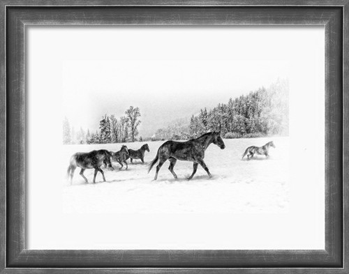 Horses romp in a winter pasture