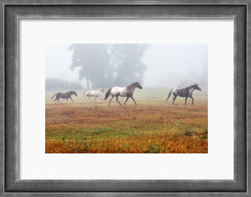 Horses romp in a fog cloaked pasture