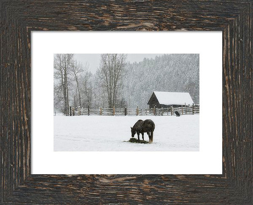 This is a low saturated Color photograph of a solitary horse eating hay on a Montana winter day.