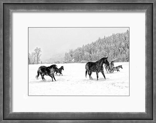 Ranch horses feeling frisky on a Montana winter day