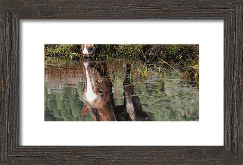 This is a color photograph of a reflection of a horse drinking from a ranch stream